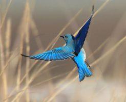 青い鳥 お葬式の流れ